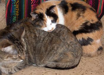 Sleeping-cats