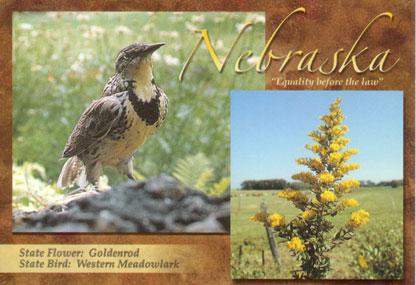 Nebraska-state-bird