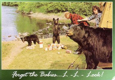 Bear-humor