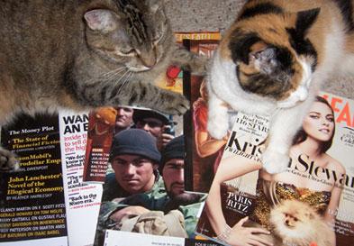 Cats-readinhg