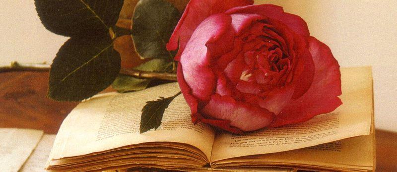 Book-w-rose