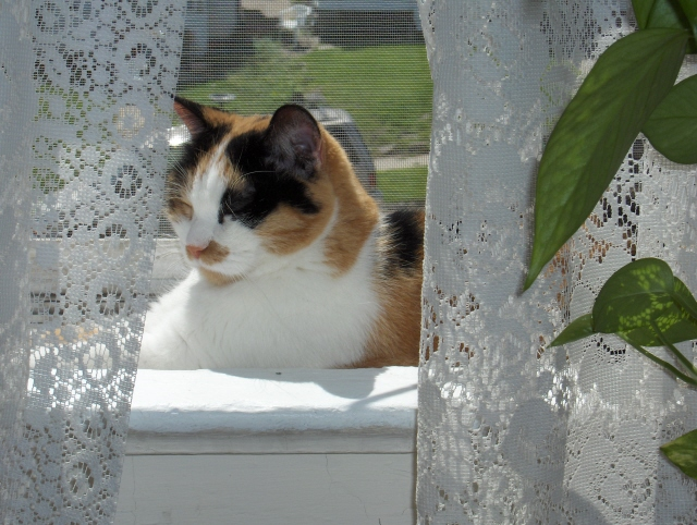 Dulce_in_window